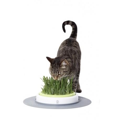 بسته علف گربه