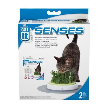 بسته علف گربه و بذر علف گربه